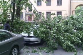 Днем 12 июня в Петербурге будет ветрено