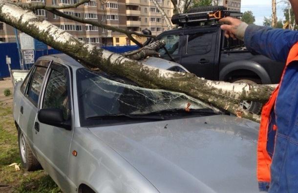 Упавшая береза раздавила легковушку в Калининском районе