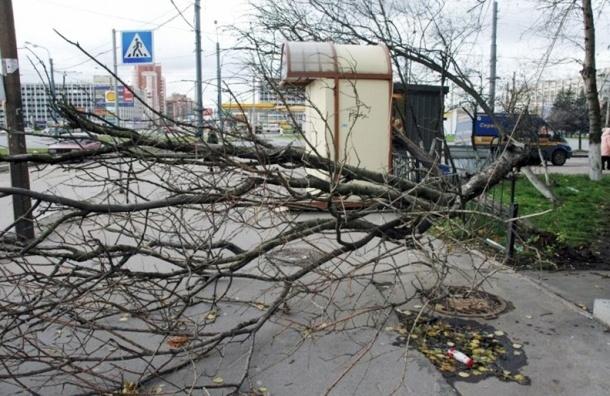 Ночью и днем в субботу в Петербурге ожидается гроза