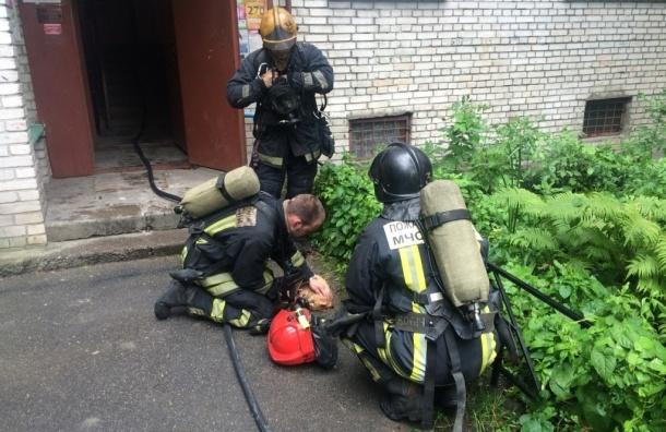 Пожарные спасли кота из горящей квартиры на улице Обручевых