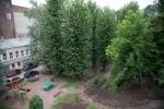 Дмитриева остановила вырубку деревьев в своем дворе: Фоторепортаж