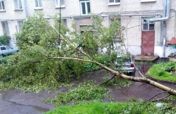 Ветер в Петербурге валит деревья на машины