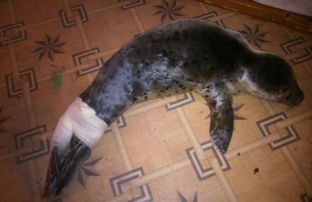 Подростки забили палками детеныша тюленя ларги на Сахалине