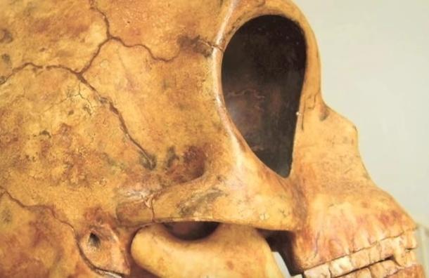 Коммунальщики в Дании нашли череп инопланетянина