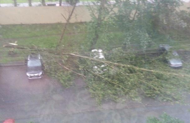 Дерево высотой с пятиэтажный дом упало на Летчика Пилютова