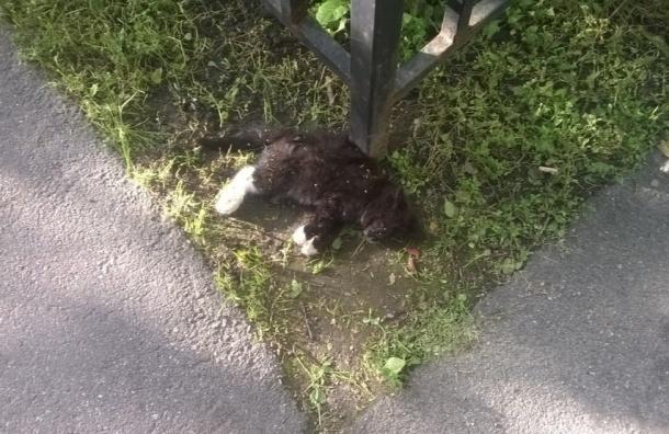 Котенка выбросили из окна дома по улице Композиторов
