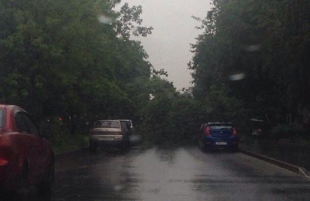 Дерево рухнуло на проезжую часть проспекта Солидарности