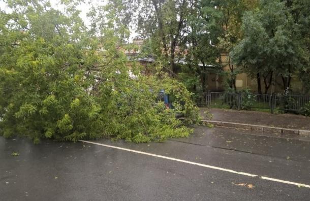 Дерево рухнуло на 9-й Красноармейской