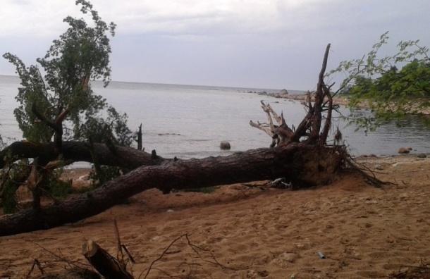 Шквалистый ветер повалил в Петербурге 35 деревьев