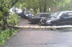 Шторм в Петербурге завершится к 19 часам