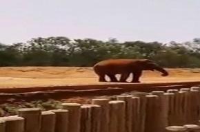 Слониха камнем убила девочку в зоопарке Марокко