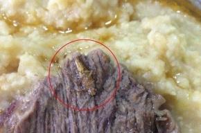 Советник Порошенко: солдат Украины кормят едой с тараканами