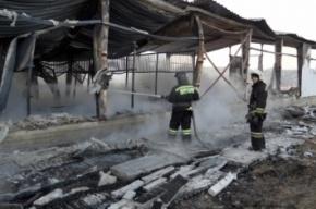 Владелец конюшни и тринадцать лошадей погибли в пожаре под Петербургом
