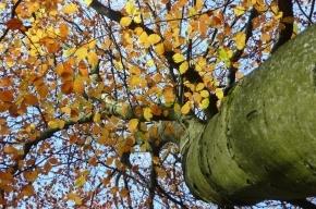 Восьмилетнего ребенка придавило насмерть сухим деревом в лесу Ленобласти