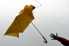 МЧС предупреждает о ветре в Петербурге