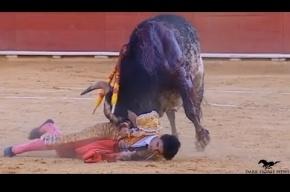 Бык в Испании впервые с 1985 года убил тореадора