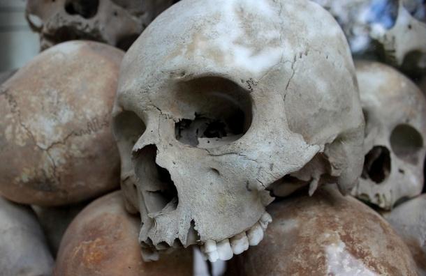 Череп с отверстием в затылке нашли на Канонерском острове