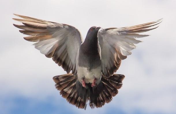 Ученые: город вызывает в птицах агрессию