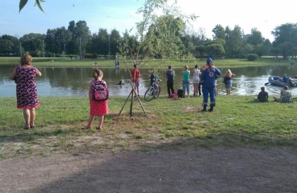 Отдыхающий спас тонущую женщину в Полюстровском парке