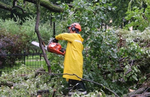 Ветер уронил в городе за минувший день 100 деревьев