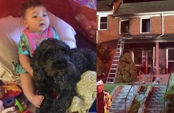 Собака погибла в США, спасая ребенка от пожара