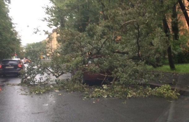 Дерево-«снайпер» упало на Гастелло на единственную припаркованную машину