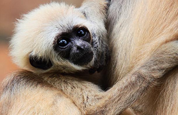 Иван-чай для обезьян примет в дар Ленинградский зоопарк