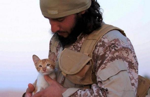 Террористы ИГИЛ используют для вербовки котят
