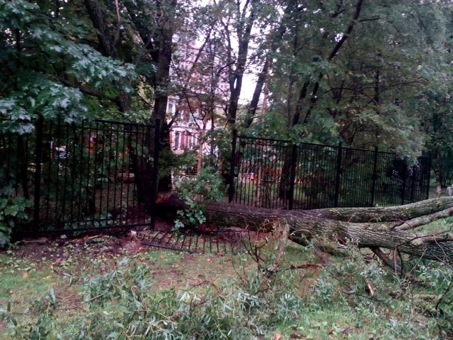 ВПетербурге штормовой ветер повалил дерево надетскую площадку