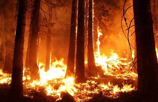 Крупный лесной пожар наКанарах вспыхнул из-за использованной туалетной бумаги