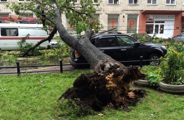 Два дерева не выдержали плохой погоды в Петербурге и упали