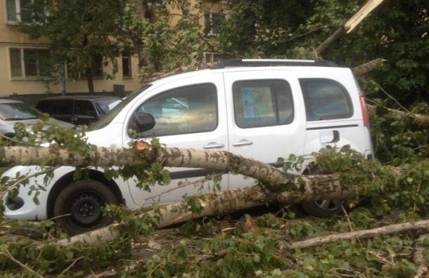 Штормовой ветер в Петербурге валит деревья на машины