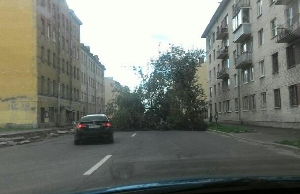 Упавшее дерево перекрыло проезд по Тамбовской улице