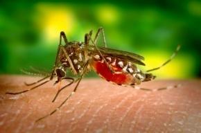 Генно-модифицированных комаров создали в США для борьбы с вирусом Зика