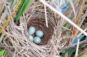Найдены слизни, питающиеся живыми птенцами