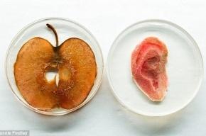 Канадские ученые вырастили человеческое ухо из яблока