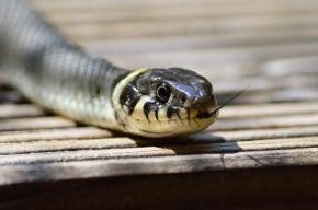 Двух детей спасли в Петербурге после укуса змей