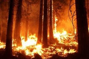 Использованная немцем туалетная бумага стала причиной пожаров на Канарах