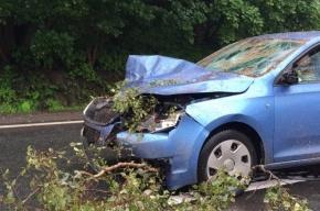 Дерево рухнуло на проезжавшую машину на Краснофлотском шоссе
