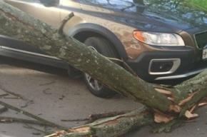 Ветер начал валить деревья в Петербурге