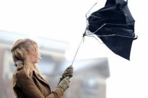 МЧС предупреждает о ливнях и сильном ветре в Петербурге