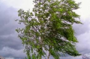 МЧС обещает ветреную погоду 13 августа