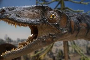 Первый артрит обнаружили у динозавра, жившего 70 млн лет назад