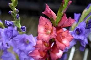Флористы назвали среднюю стоимость букета к 1 сентября