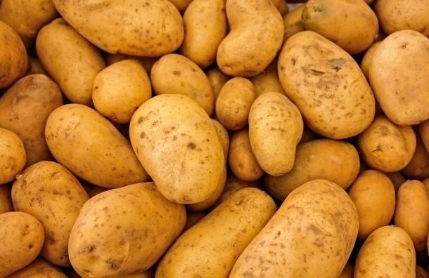 Картофель и капуста в Петербурге подорожали на 10 процентов