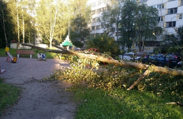 Дерево рухнуло на детскую площадку на проспекте Луначарского