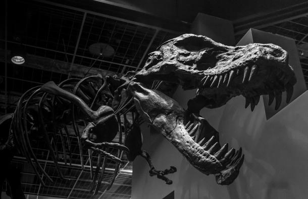 Ученые из Петербурга нашли в Сибири нового динозавра