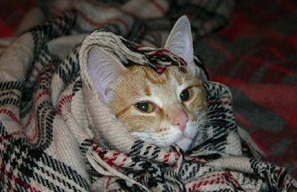 Тепло поступило в 85% петербургских домов