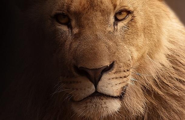 5 львиц-лесбиянок отрастили гриву вБотсване