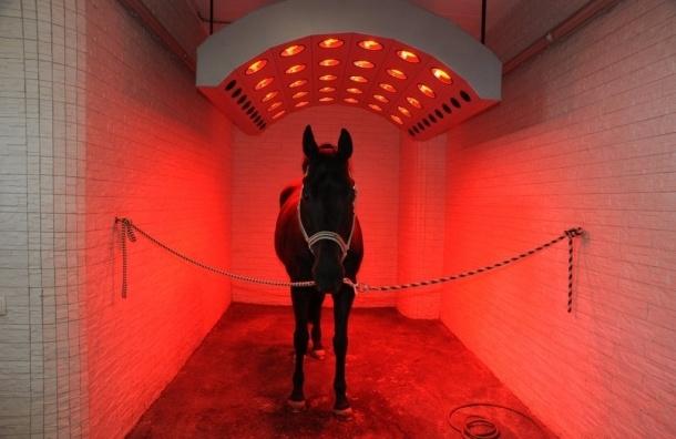 Столичная полиция закупит солярии для лошадей